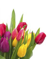 Two grower's bunches with 10 tulips each (20 total tulips). Tulip colors will vary.