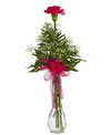 A single carnation and babies breath are arranged in a 9in  clear bud vase with a sheer ribbon accent. Height 18in