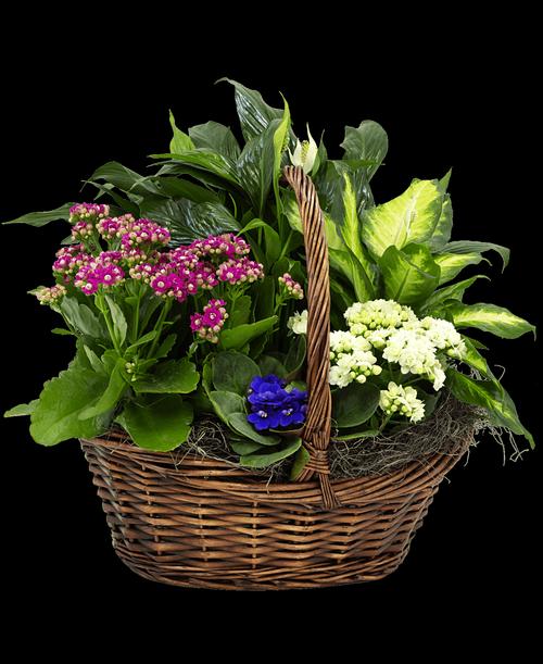 European Plant Basket #859
